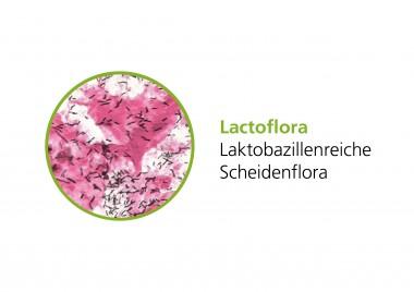 Lactoflora