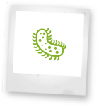Antibiotika Icon